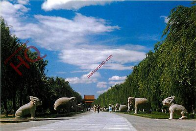 Picture Postcard: The Ming Tombs