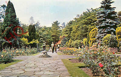 Picture Postcard--Swindon, Town Gardens
