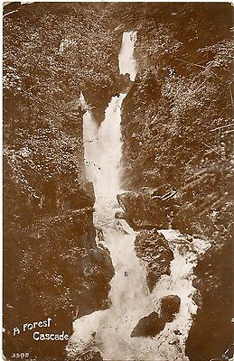 A Forest Cascade 1909 (Davidson Brothers Photographic Series)