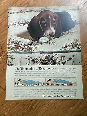 1961 Beautyrest by Simmons Ad  Basset Hound  Beagle Dog ?