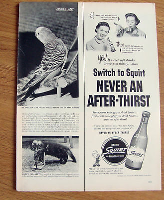 1951 Squirt Soda Ad Never an After Thirst