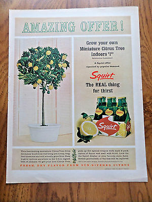 1964 Squirt Soda Ad Amazing Offer Grow your Own Miniature Citrus Tree Indoors