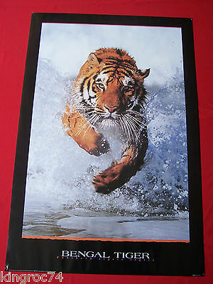 "NEW - 1996 'BENGAL TIGER COMING AT YOU!"" Amazing picture and beautiful print!"