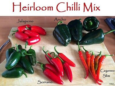 Chilli Mix   - Jalapeno   Ancho   Serrano   Cayenne Slim  25 Seeds of each Chili
