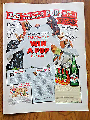 1951 Canada Dry Soda Ad Win a Pedigreed Pup contest Boxer Beagle Dachshund Dogs