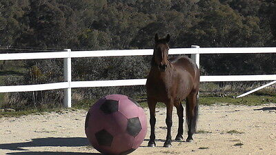 Cover for Horse Exercise Ball New Improved Red/Black100cm Free Rein Equestrian ,