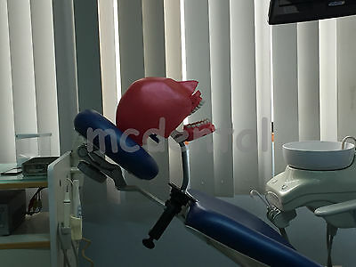 Dental Manikin Simulator Phantom Bench Mount Teeth Toth Dentoform Study