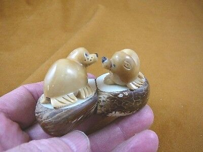 (TNE-SEAL-476-A) pair of brown Seals TAGUA NUT palm figurine carving seal mates