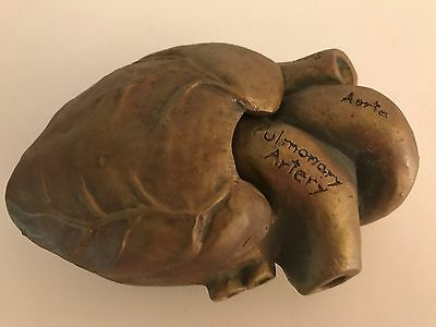 R.shipman Pottery Anatomical Hear Model With Atria & Ventricle Chambers