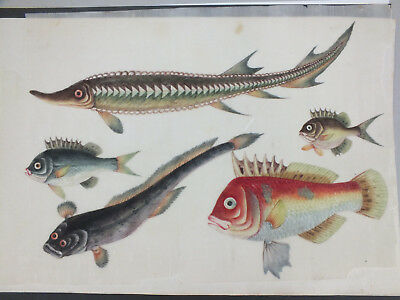 9) FINE CHINESE WATER COLOUR STUDY ON RICE/PITH PAPER OF SPECIES OF FISH 19thC