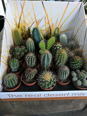 Assorted selection of 5 X Cacti in 5.5cm pots.CHEAP!!!!!