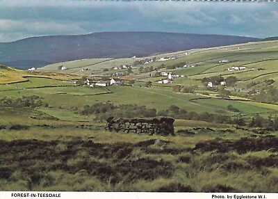 Postcard Forest In Teesdale Co Durham