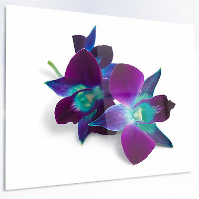 Design Art 'Deep Purple Orchid Flowers on White' Photographic Print on Metal