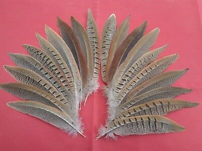 """20 Small Cock Pheasant Tail Feathers 5"""" - 7"""" - Crafting"""