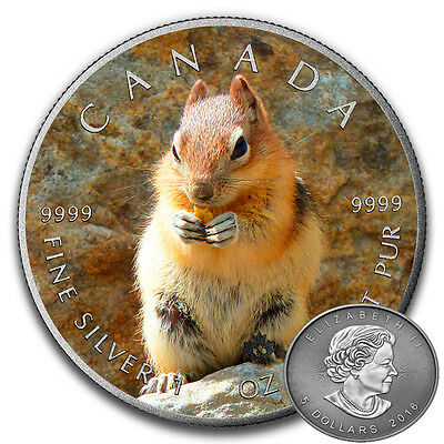 SQUIRREL - CANADIAN WILDLIFE SERIES - 2016 1 oz Pure Silver Coin - Color & AF