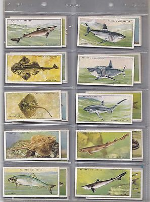 Cigarette Cards - Sea Fish - Issued 1935 - Full set of 50