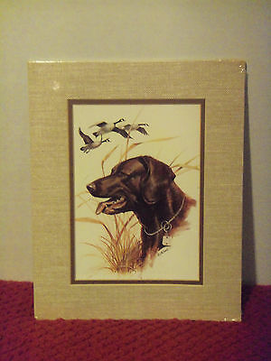 "Hunting Dog LABRADOR RETRIEVER Canadian Geese 5"" x 7"" Print K. J. McDonald 1978"