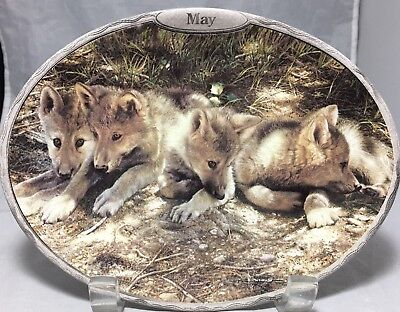 Wolves cubs oval decorative plate Sentinels of the Seasons May by Carl Brenders