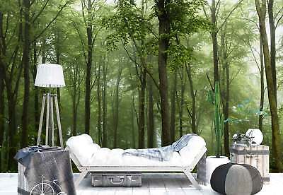 Woodland Trees Greenery Mist Photo Wallpaper Wall Mural (1X-1084769)