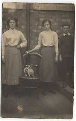 Girls And Boy Posed Outside House With Rabbit On A Chair Old Real Photo Postcard