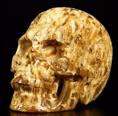 "Huge 5.0"" PETRIFIED WOOD Carved Crystal Skull, Realistic, Crystal Healing"