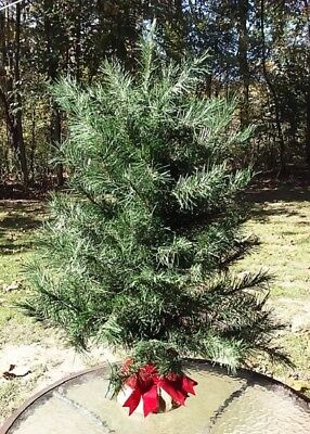 "Christmas Tree Trim A Home 32"" Table Top Holiday Home Decor W Tag"