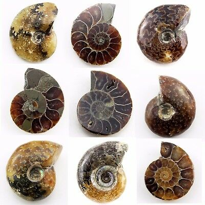 451.40 ct Natural Ammonite  Fossil  Lot  ( Untreated ) / S6602
