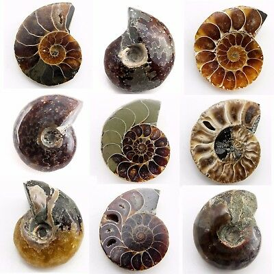 490.30 ct Natural Ammonite  Fossil   Lot ( Untreated ) / S6138