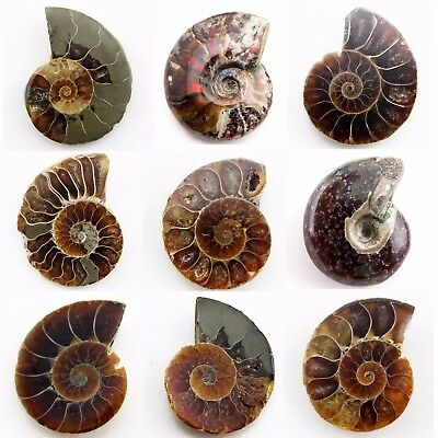 649.95 ct Natural Ammonite  Fossil   Lot ( Untreated ) / S6487