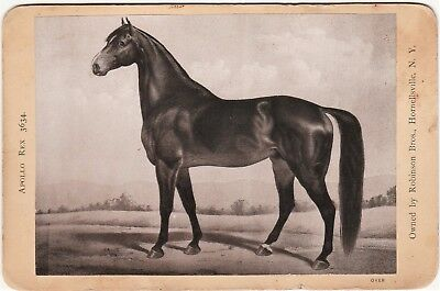 RARE Advertising Cabinet Photo Card - Apollo Rex Stallion Horse 1880 Hornell NY