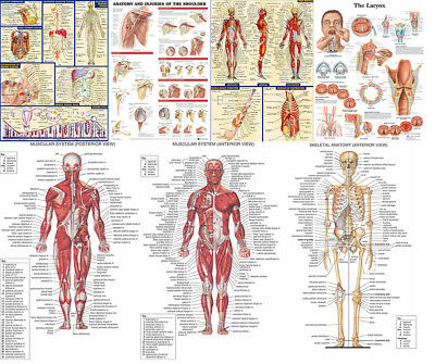 Human Body Anatomy System Poster Anatomical Chart Doctor Educational Poster Silk