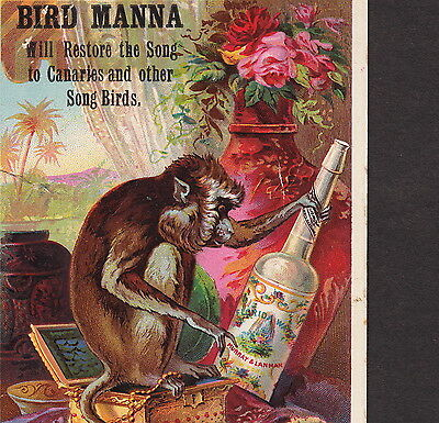 Song Bird Manna Canary Cure 1800's Florida Water Monkey Advertising Trade Card