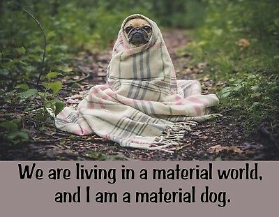 METAL FRIDGE MAGNET Living In Material World I Am Material Dog Pug Humor Funny
