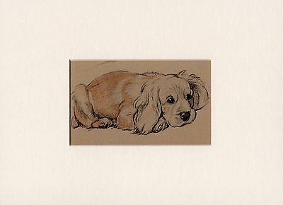 CUTE GOLDEN COCKER SPANIEL OLD 1934 CECIL ALDIN DOG ART PRINT READY MOUNTED