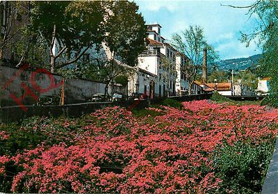 Picture Postcard:;Madeira, Funchal, Bougainvillea