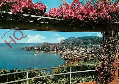 Picture Postcard--Madeira, Funchal