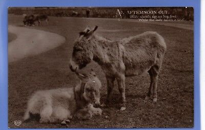 Old Vintage 1911 Rp Postcard Animals Donkeys Resting