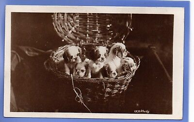 Old Vintage 1910 Rp Postcard Baskets Of Puppies Dogs Animals