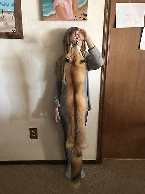 Nice Red Fox Pelt/#1 Select Fur Heavy winter Coat/Quality Tanned/Coyote/Skunk