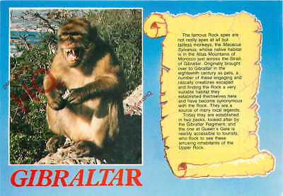 Picture Postcard--Gibraltar, Rock Ape