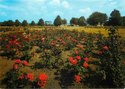 Picture Postcard- Lidice, The Garden Of Friendship And Peace