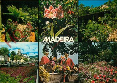 Picture Postcard:;Madeira (Multiview) Flowers