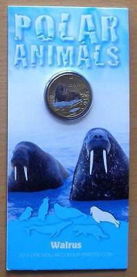 Australia 2013 Polar Animals Walrus $1 One Dollar Unc Coloured Coin Ram