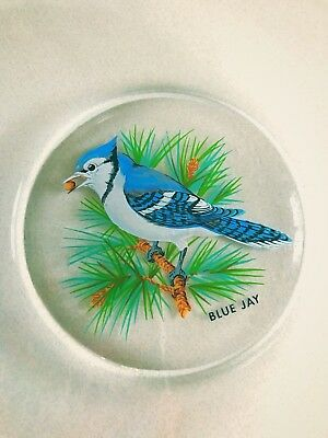 Vintage Blue Jay Bird Plate Collectible Gorgeous