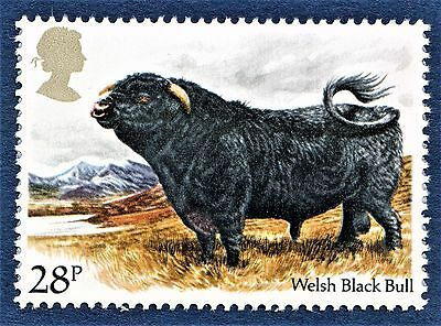 GB Welsh Black Bull / Bos taurus / Cattle Breed / on a Stamp - U/M 13
