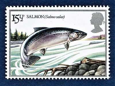 GB Atlantic Salmon / Salmo salar /Fish / Fishing on a Stamp - U/M 13