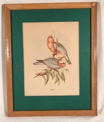 Vintage Original Colored Litho Monograph Print ~ John Gould ~ Framed ~ Birds #5