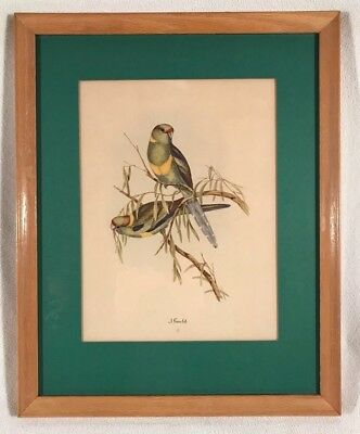 Vintage Original Colored Litho Monograph Print ~ John Gould ~ Framed ~ Birds #6