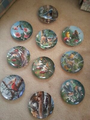 Kevin Daniel Knowles Collectors Plate Birds of Your Garden Set of 10