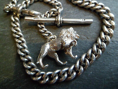 Antique Chunky Graduated 1905 Solid Silver Albert Pocket Watch Chain + Lion Fob
